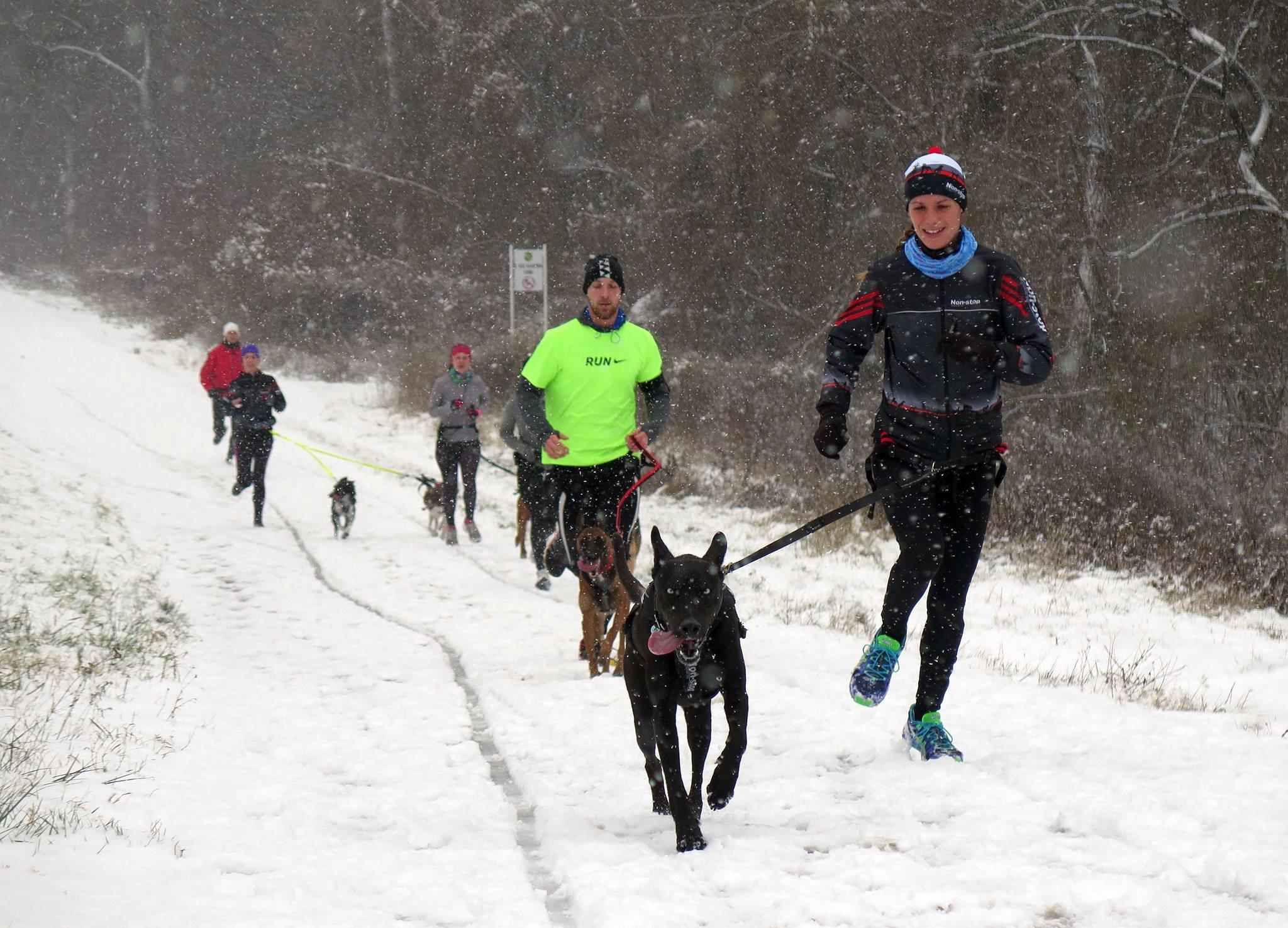 Na behanie so psom je práve zima ideálna – psom sa v nízkych teplotách  dobre pracuje a tréningy tak môžu byť omnoho dlhšie ako v lete. fed8d328f5e